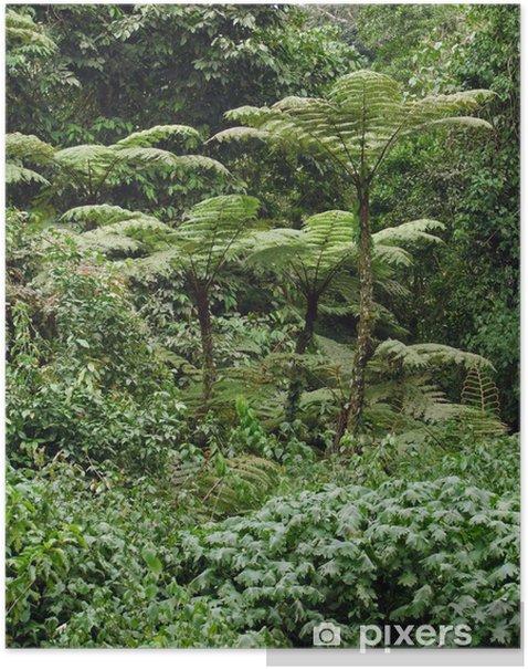 Plakat Roślinność lasów tropikalnych w Afryce - Lasy