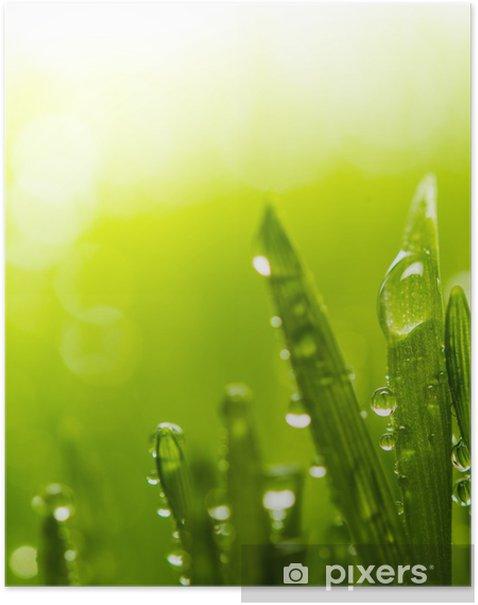 Plakat Rosy na świeżej zielonej trawie - Pory roku