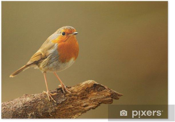 Plakat Rouge-gorge 1 - Ptaki