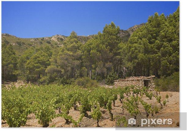 Plakat Roussillon, Corbières: winorośl - Drzewa