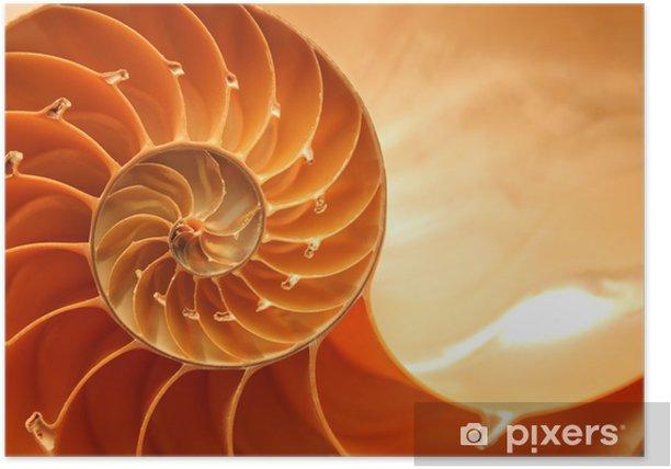 Plakát Rozdělit nautilus lastura ukazující vnitřní plovákové komory - Vodní a mořský život