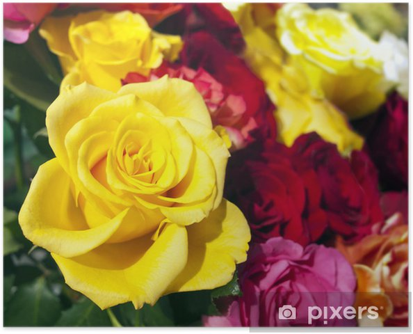 Plakat Róże - Szczęście