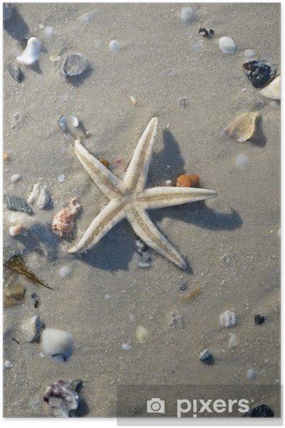 Plakat Rozgwiazda na plaży - Zwierzęta żyjące pod wodą