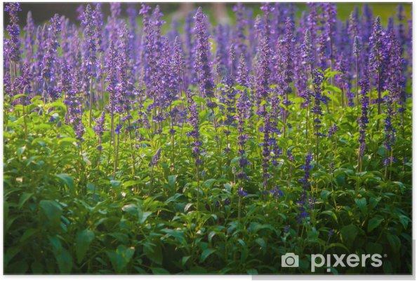 Plakát Rozkvetlá zahrada - Květiny