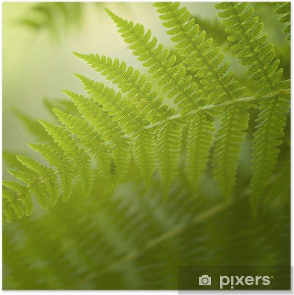 Plakat Rozmyte tło paproci - Rośliny