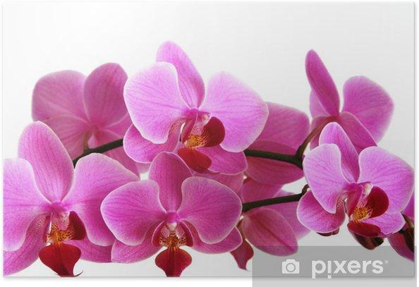 Plakat Różowa orchidea - Kwiaty
