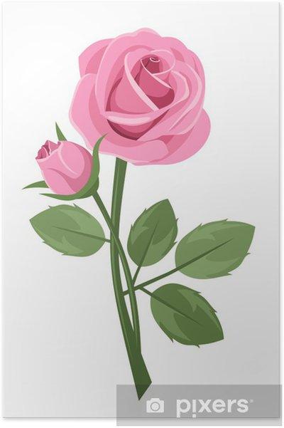 Plakat Różowa róża z macierzystych wyizolowanych na białym tle. Ilustracji wektorowych. - Rośliny i kwiaty