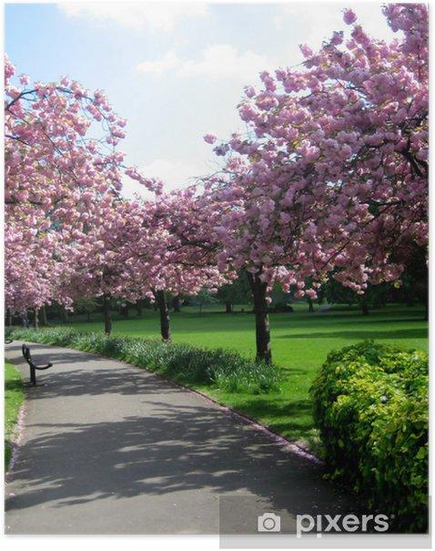 Plakat Różowe kwitnących drzew - Pory roku