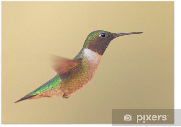 Plakat Ruby-(Archiloch colubris) w locie - Ptaki
