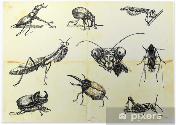 Plakat Rucne Kreslena Kolekce Brouci A Hmyz Pixers Zijeme Pro