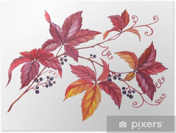 Plakat Rucne Kresleny Akvarel Barvity A Zivouci Vetev Divoke Revy