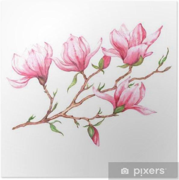 Plakát Ručně kreslenými akvarel izolované ilustrace růžové magnólie pobočky na bílém pozadí - Rostliny a květiny