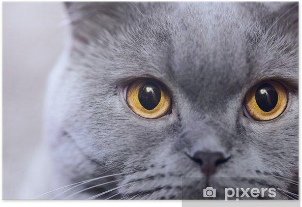 Plakát Ruská modrá kočka - Témata