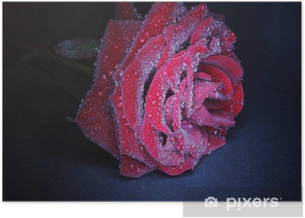 Plakát Růže - Témata