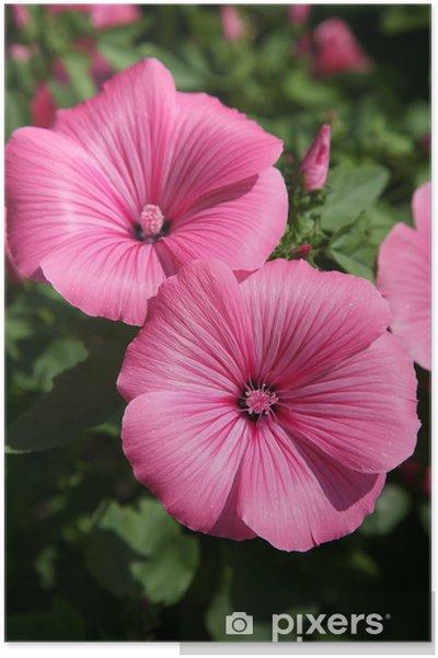 Plakát Růžová hollyhock - Květiny