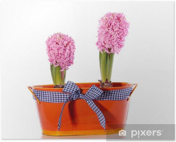 Plakát Růžová hyacint žárovka květiny v železném kbelíku zdobený ch - Domov a zahrada