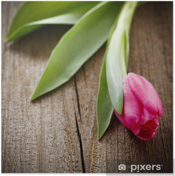 Plakát Růžová tulipán na zvětralých dřevěné desce - Mezinárodní svátky