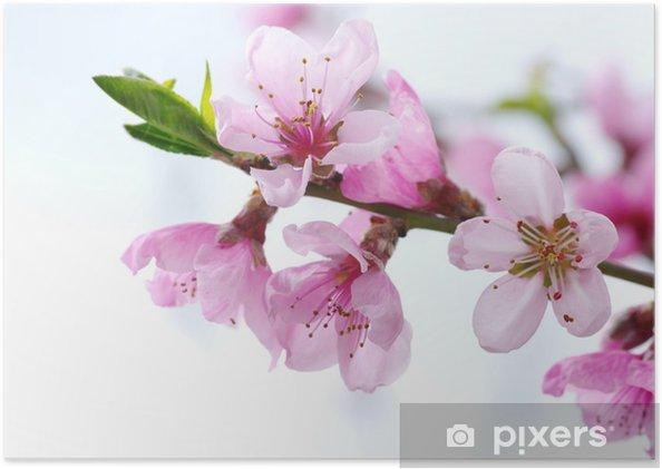 Plakát Růžové květy - Květiny