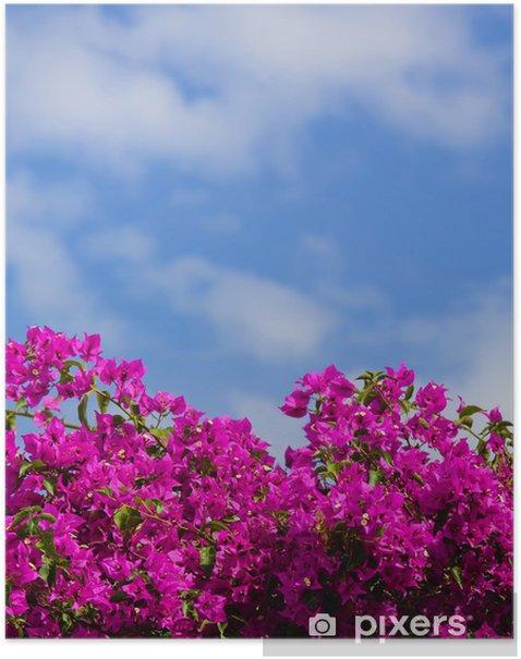 Plakát Růžový květ Bush v Santorini, Řecko. - Květiny