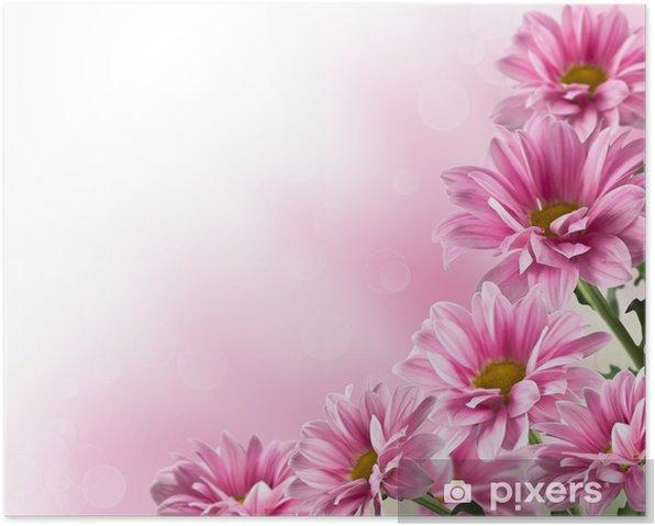 Plakát Růžový kvetoucí chryzantémy květiny - Styly