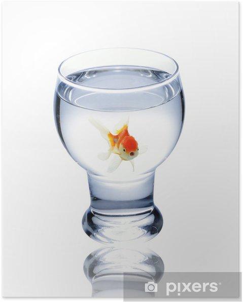 Plakat Ryba w szklance - Zwierzęta żyjące pod wodą