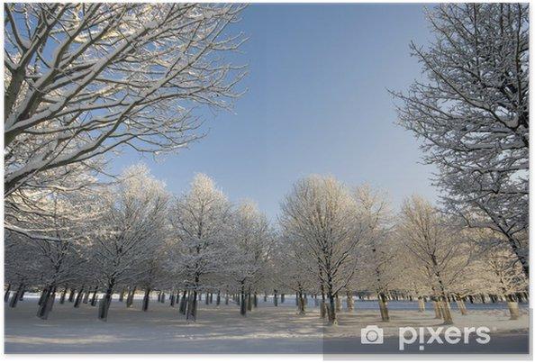 Plakat Rzędy drzew w zimie - Krajobraz wiejski