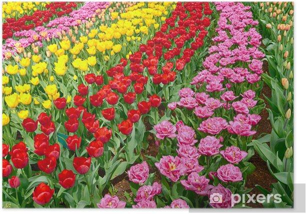 Plakat Rzędy tulipanów ogród z życiem - Pory roku