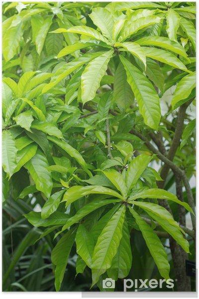 Plakat Sagaribana - Rośliny