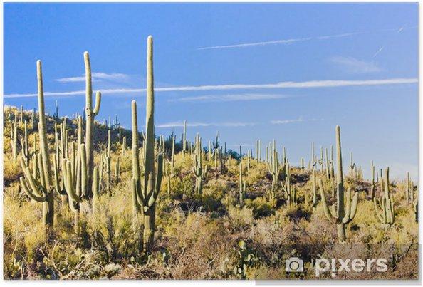 Plakát Saguaro národní park, ARIZONA_USA - Amerika