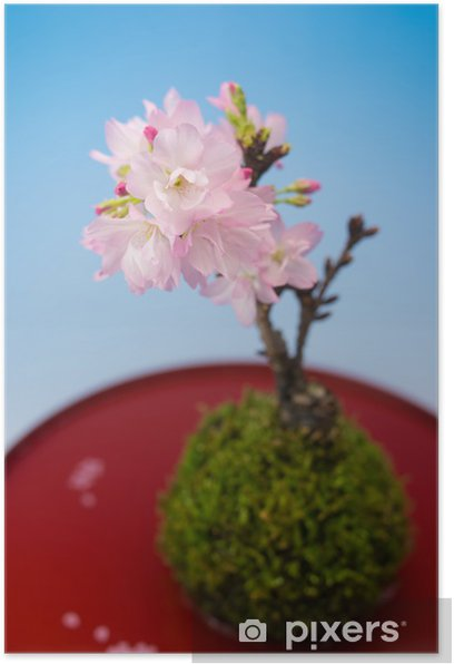 Plakat Sakura garnek - Kwiaty