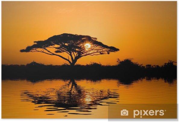 Plakat samoprzylepny Akacja drzewo o wschodzie słońca - Tematy