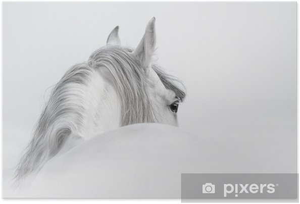 Plakat samoprzylepny Andaluzyjski Koń w mgle - iStaging
