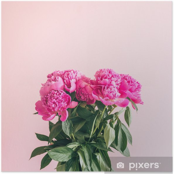 Plakat samoprzylepny Bukiet pięknych piwonii na różowym tle. - Rośliny i kwiaty