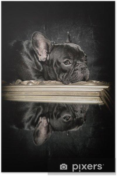 Plakat samoprzylepny Buldog francuski odbicie - Buldogi francuskie