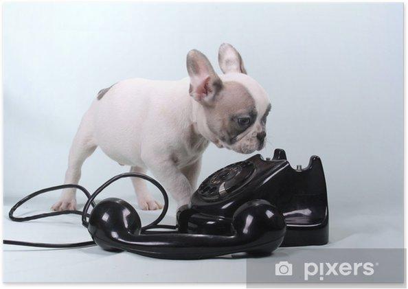 Plakat samoprzylepny Buldog francuski puppy i telefon - Buldogi francuskie