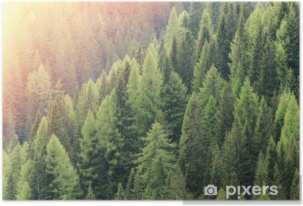Plakat samoprzylepny Czarodziejski las oświetlony przez światło słoneczne. Iglasty las regionu. - Krajobrazy