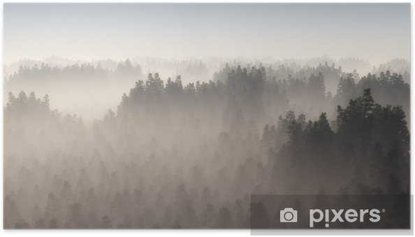 Plakat samoprzylepny Gęsty las sosnowy w porannej mgle. - Krajobrazy