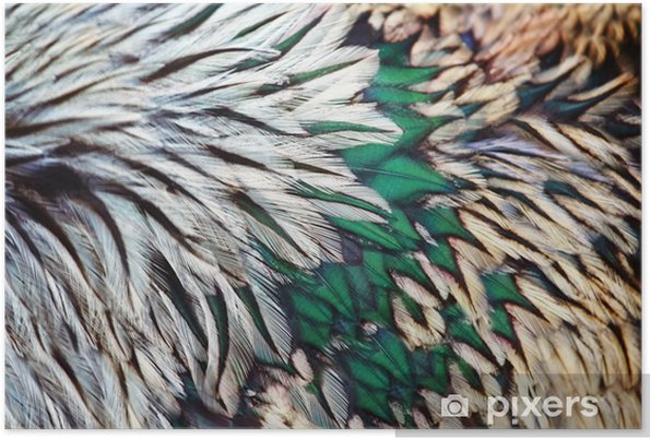 Plakat samoprzylepny Jasny brąz grupa pióro jakiegoś ptaka - Zasoby graficzne