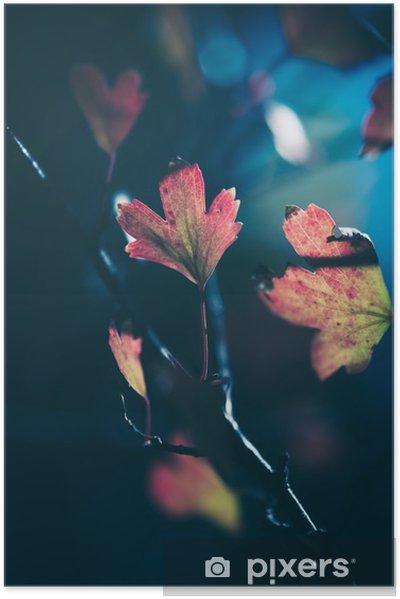 Plakat samoprzylepny Jesienne liście w słońcu - Rośliny i kwiaty