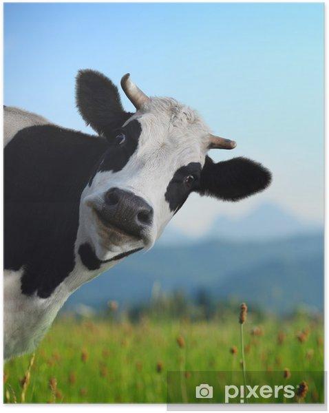 Plakat samoprzylepny Krowa -