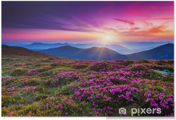 Plakat samoprzylepny Kwiat - Łąki, pola i trawy