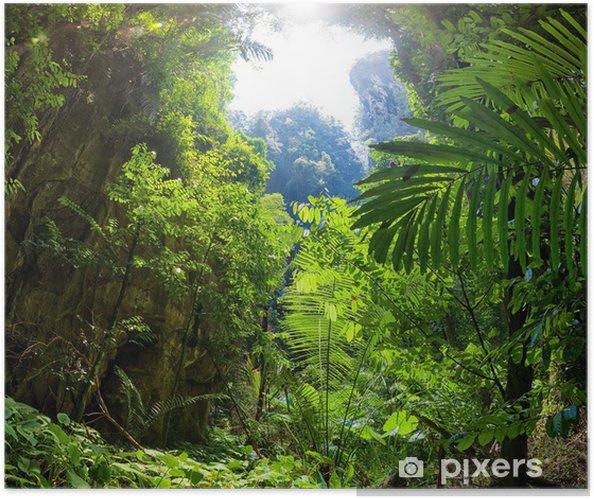 Plakat samoprzylepny Las dżungla - Tematy
