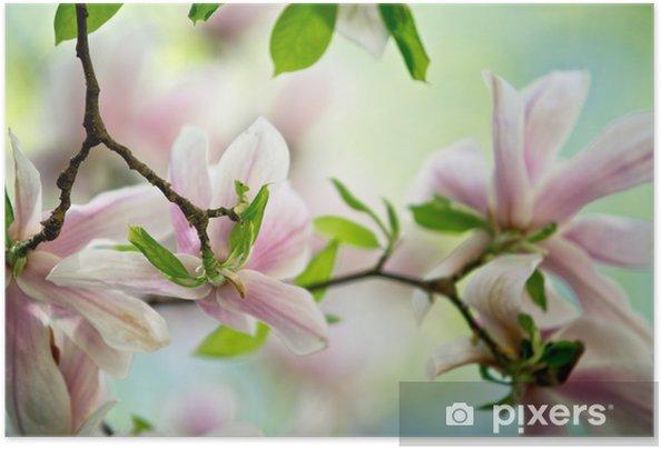 Plakat samoprzylepny Magnolia - Tematy