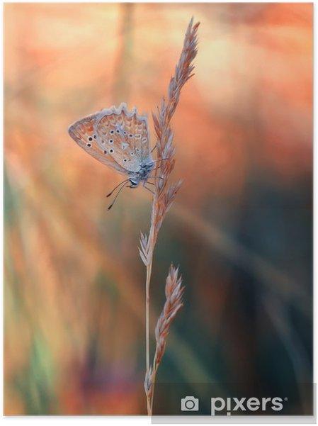 Plakat samoprzylepny Motyl - Zwierzęta