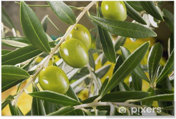 Plakat samoprzylepny Olive tree branch - Oliwki