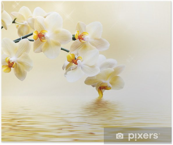 Plakat samoprzylepny Piękna biała orchidea -