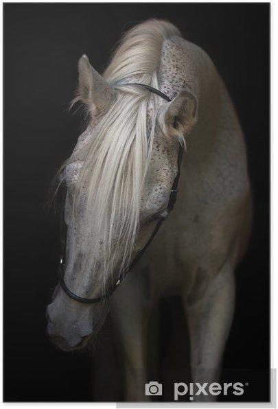 Plakat samoprzylepny Portret konia arabskiego na białym tle. - Zwierzęta