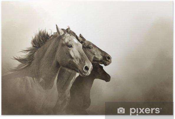 Plakat samoprzylepny Portret trzech koni mustanga w zachód mc - Zwierzęta