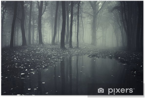 Plakat samoprzylepny Staw w lesie z mgły - Tematy
