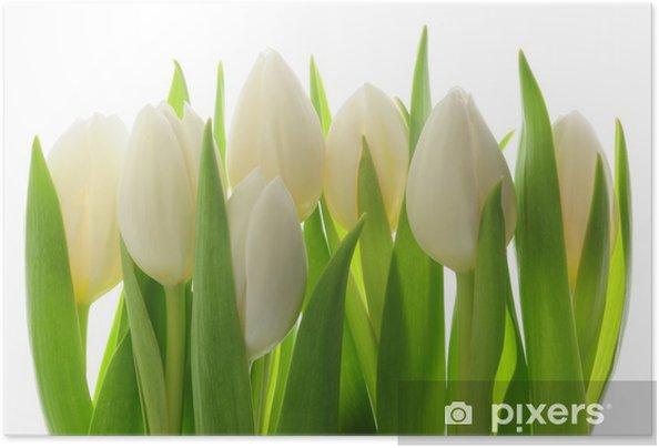 Plakat samoprzylepny Tulipany - Tematy